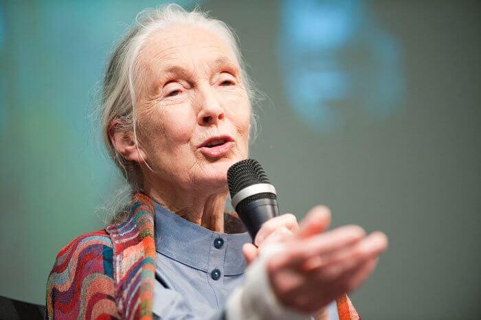 Jane Goodalls Vortrag