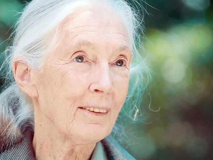 Porträt Jane Goodall