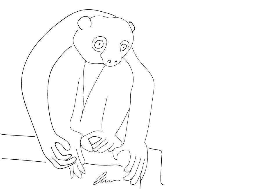 Der Lemur hockt und schaut