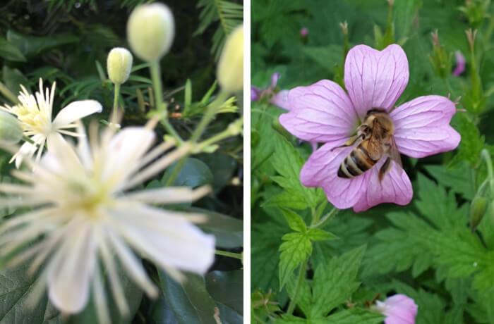 Blüten, gesehen von zwei Teilnehmerinnen: Angelika Thomas-Roper (Foto links) und Florence Kotowski (mit Biene)