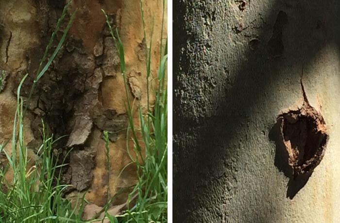 Die Charakteristika von Baumrinden. Fotos: Angelika Thomas-Roper