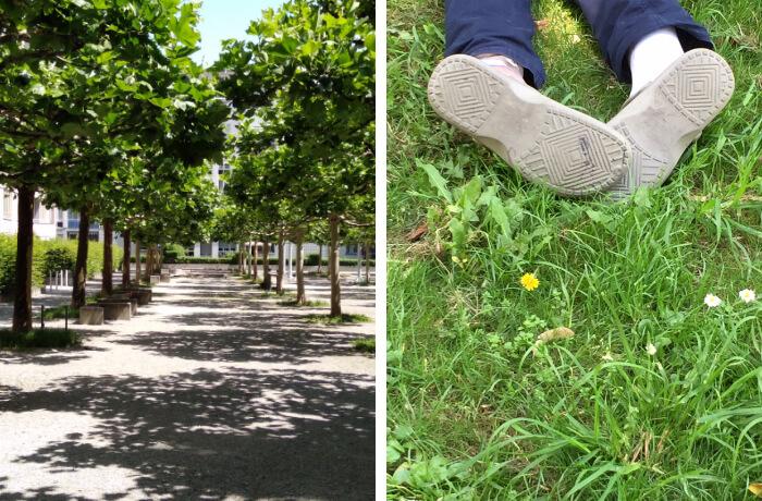 Von fern und nah: Allee. Foto von Graça Santos Schäfer und im Gras, aufgenommmen von Antoinette Rode.