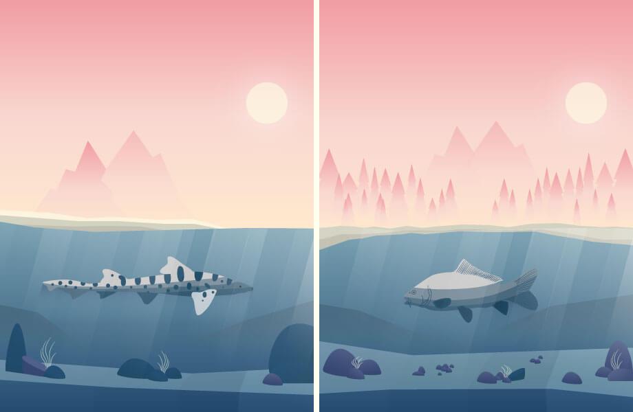 Zweiteilung des Bildes. Links ein Katzenhai unter Wasser, rechts ein Karpfen unter Wasser.