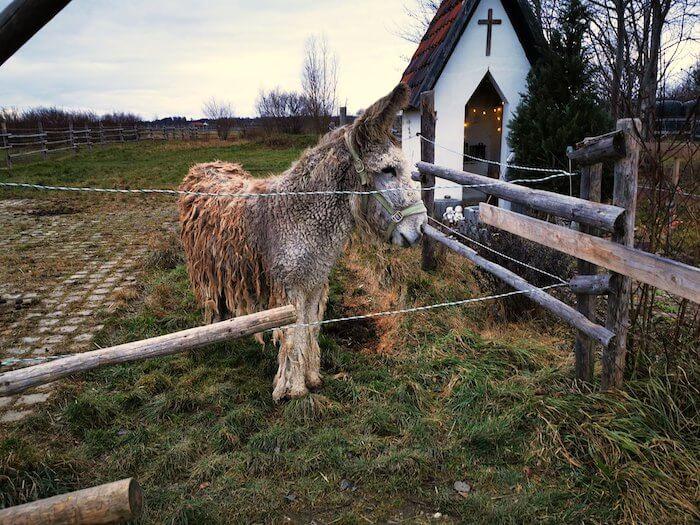 Esel und Kapelle. Foto: Janne Kellner