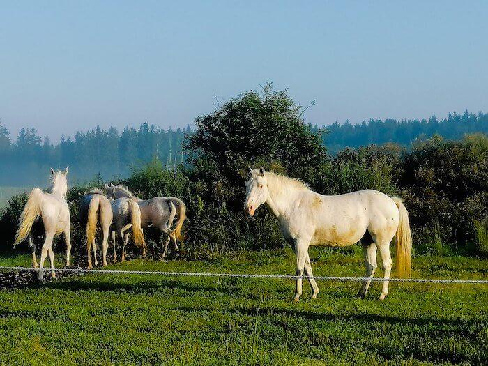 Pferde auf der Koppel. Foto: Janne Kellner