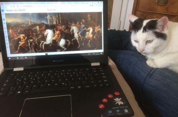 Mit Katze auf der Couch im Museum.