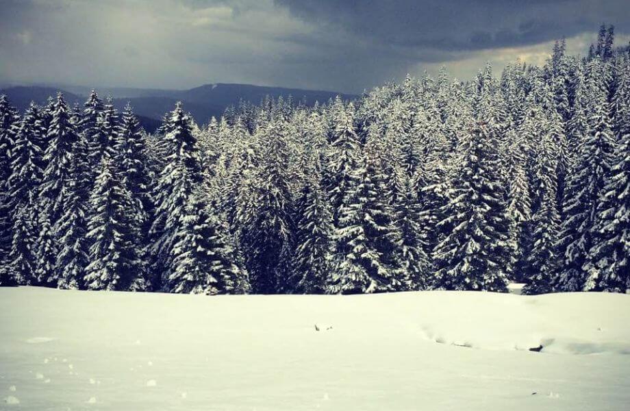 Schneelandschaft mit Bäumen.