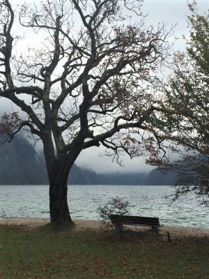 Eine leere Bank unter kahlen Bäumen an einem Bergsee.