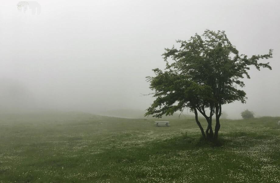 Eine Frühlingswiese im Nebel, im Hintergrund eine leere Bank, im Vordergrund ein Baum.