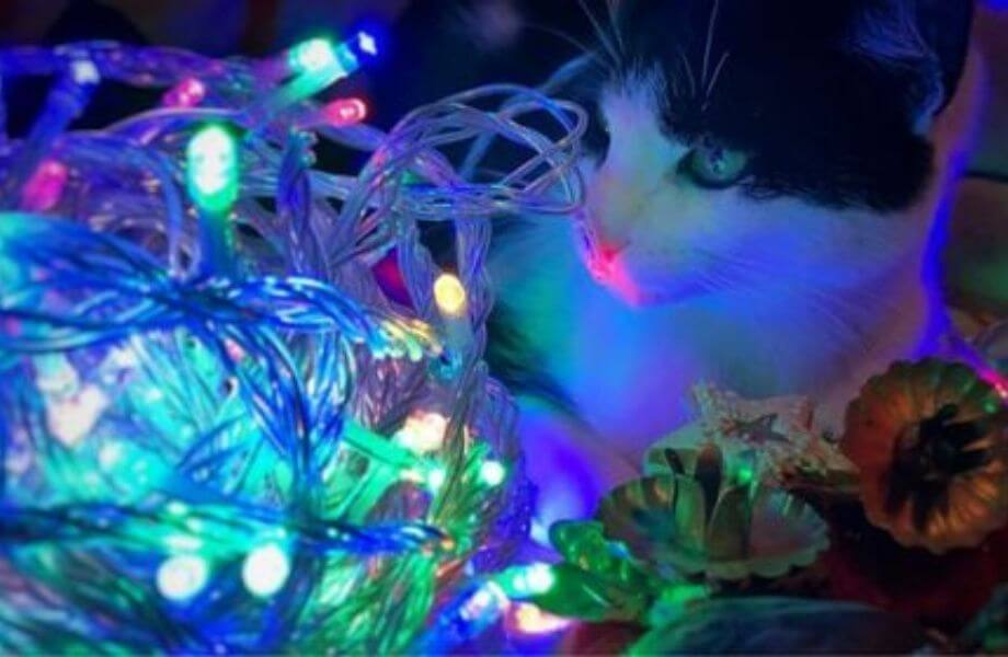 Eine Katze sitzt neben einer bunten Lichterkette mit weihnachtlicher Deko