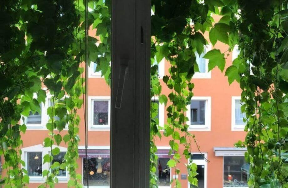 Ein Blick aus einem mit Efeu bewachsenen Fenster auf ein gegenüberliegendes Haus