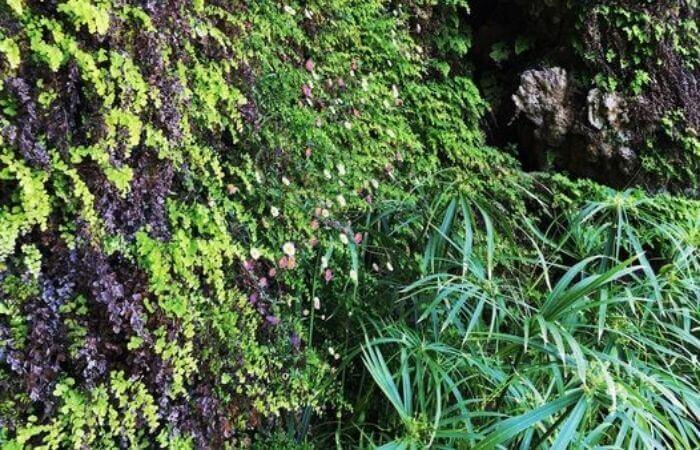 Pflanzen überwachsen eine Mauer.